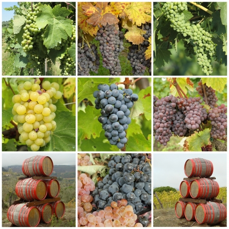 bunch of grapes  and wine barrels -  collage photo