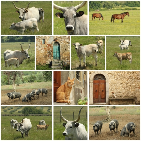 tuscan farm collage photo