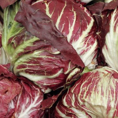 radicchio: radicchio di Chioggia , kind of red  leaf chicory, typical for venetian Chioggia