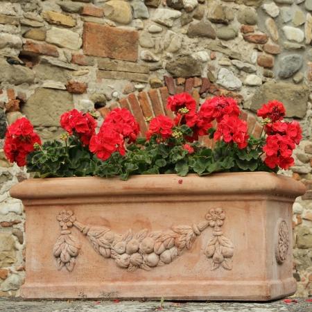 geranium: red geranium flowers in elegant  ceramic box, at background antique wall with arc , Tuscany