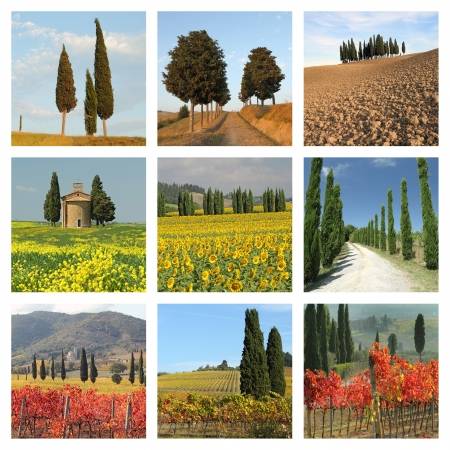 collage with  cypresses  in tuscan landscape photo