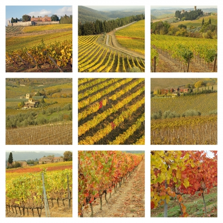 series of images with tuscan vineyards in autumnal colors  photo