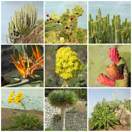 canarian: Canary Islands flora collage