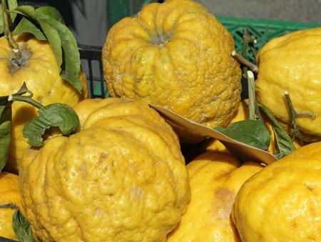cidra: frutas cidra en venta en Amalfi, Italia