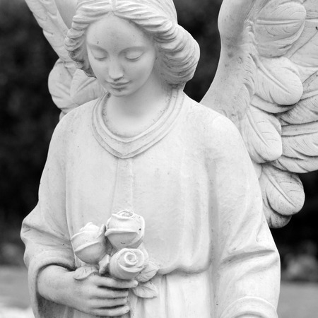 cemetery angel statue holding roses, Italy ,Europe photo