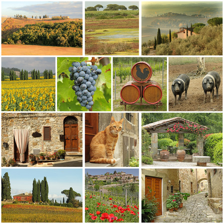 harvests: beautiful tuscan images collage