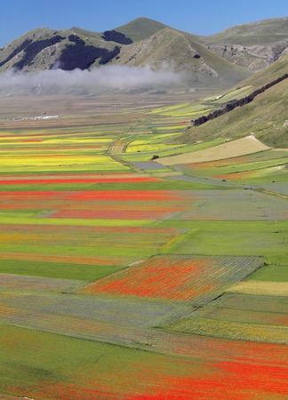 sibillini: fantastic colorful flowering of fields on Piano Grande in National Park of Sibillini Mountains in Italy