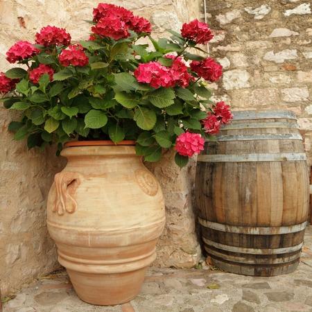 nook: flowering hortensia in elegant ceramic vase in Spello village, Umbria, Italy