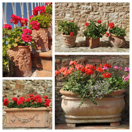 group of images with flowering geranium plants in various ceramic pots, Tuscany photo