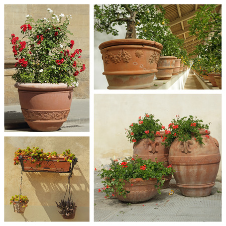 pelargonium: group of images with beautiful plant containers, Tuscany