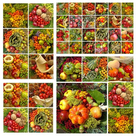 fall fruits pattern photo