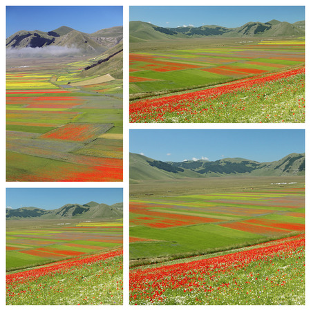 sibillini: images of fantastic colorful flowering  fields on Piano Grande in National Park of Sibillini Mountains in Italy Stock Photo