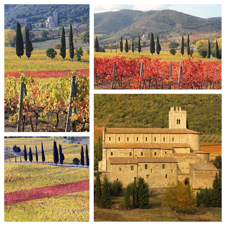 montalcino: amazing landscape of tuscan vineyards in autumn,  St. Antimo Abbey in Castelnuovo dell
