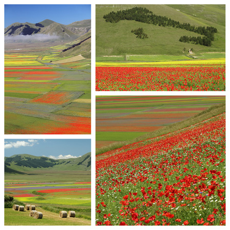 sibillini: images with colorful flowery fields,  Castelluccio di Norcia ,Italy