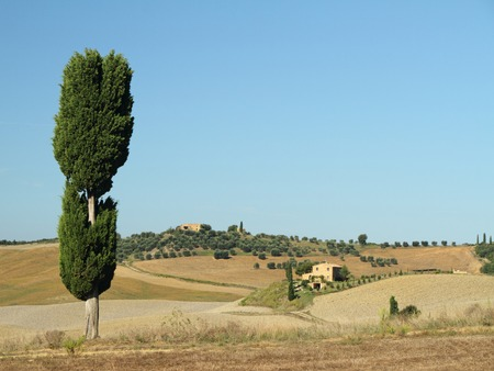 terrapille: solitary cypress in spectacular tuscan countryside  near Pienza, Terrapille, Tuscany Stock Photo