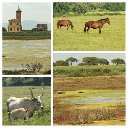 peaceful images of  landscape in National Park l photo
