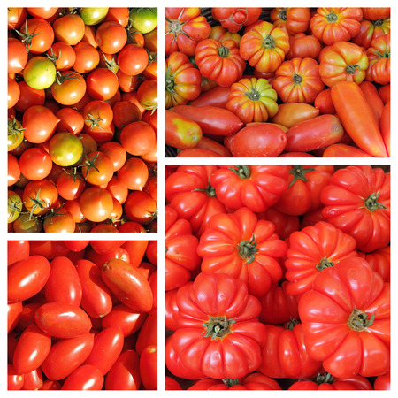 group of  images with assorted  tomatoes on italian market as background photo