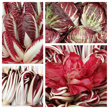 radicchio: radicchio collage - variety of italian red chicory