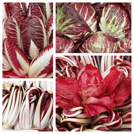 radicchio: radicchio collage - variety of italian red chicory
