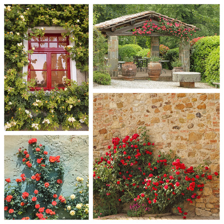 rose photo: group of images with climbing roses in tuscan garden, Europe