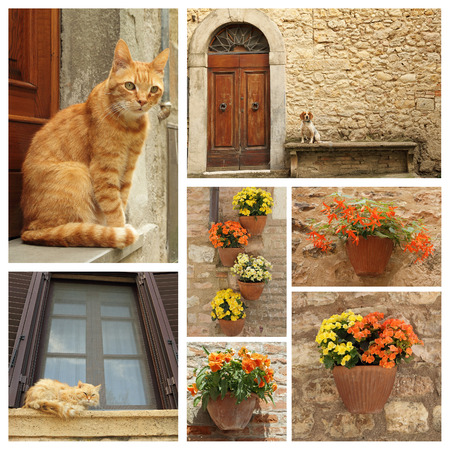 house cat: dog, cats and flowers on idyllic tuscan terrace
