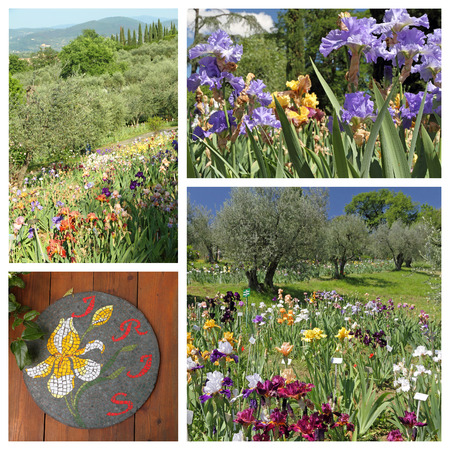 giardino: The Garden of Iris ( Giardino dell Stock Photo