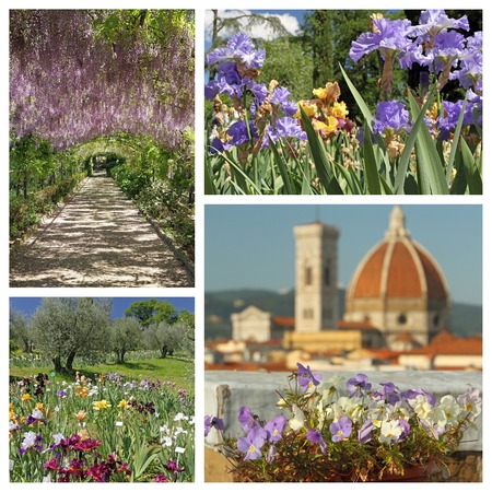 impressive florid Florence in spring - composition, Toscana, Italy, Europe photo