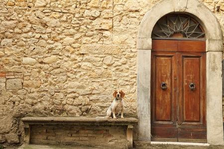kleine hond zittend op stenen bank in de voorkant van het Toscaanse huis, Italië, Europa Stockfoto