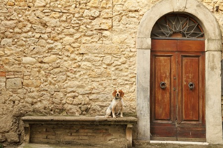 small dog sitting on stone bank in front of the tuscan house, Italy, Europe