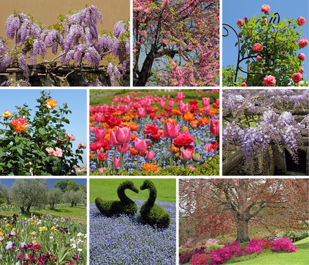 wisteria: flowering spring garden collage Stock Photo