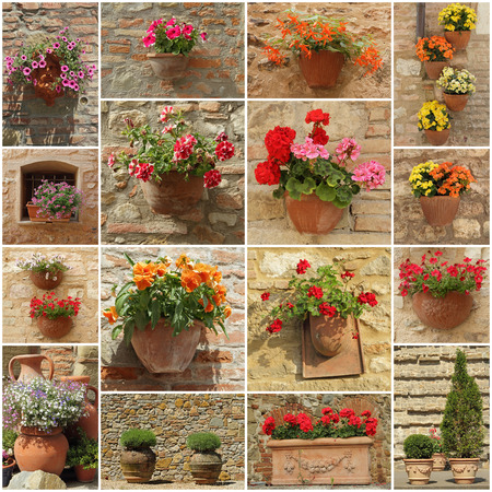 decorative wall: abstract floral wall made of group of images with flowerpots Stock Photo