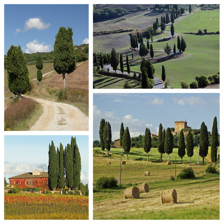 valdorcia: cypresses in wonderful Tuscan countryside