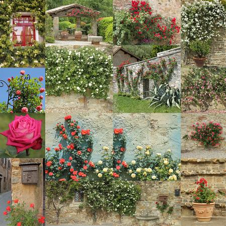 rose garden: abstract rose garden photo montage