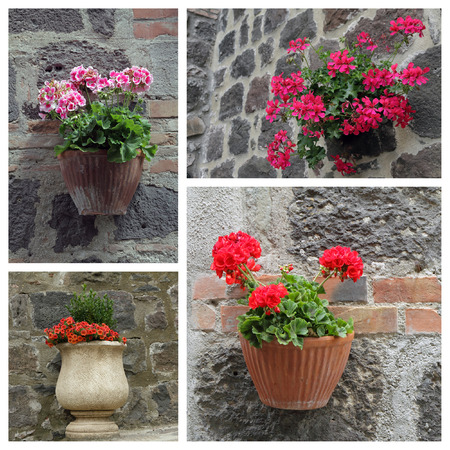 flowering plants: closeup of flowering plants outside house - collage