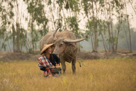 green life: Asian young lady sit beside buffalo and hold radio in hand.