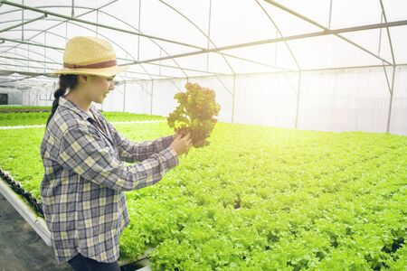 Young asian woman farmer hand hold red oak check quality of organic hydroponic greenhouse farm before selling,Small business entrepreneur and organic vegetable farm and healthy food concept