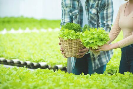 Hand of asian man and asian woman hold basket of green lettuce in greenhouse hydroponic farm, Small business entrepreneur concept