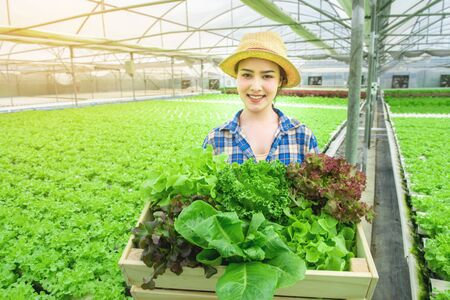 Portrait of young attractive beautiful Asian woman harvesting fresh vegetable salad from her hydroponics farm in greenhouse hand hold wooden basket and smile ,Small business entrepreneur concept . Banco de Imagens