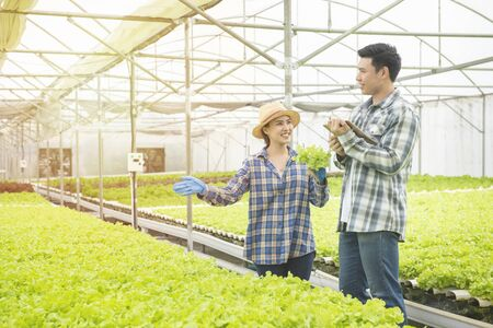 Couple asian farmer owner using touchpad green oak hydroponic vegetable. Owner hydroponic organic farm using touch pad for check green vegetable quality in the field. small future agriculture concept 版權商用圖片