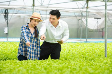 Organic vegetable farm,asian couple farmers inspect organic vegetables in the farm, vegetable salad, vegetable farm for commercial trade,Small business entrepreneur and organic vegetable farm concept.