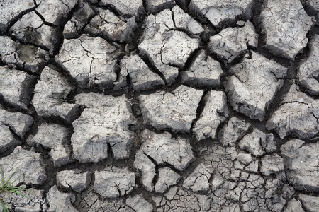 fissures: Cracked earth pattern on dry, drought-stricken bare soil