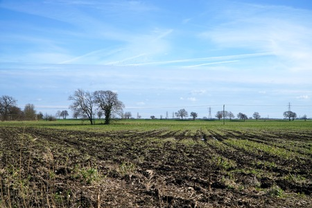 A flat, rutted, empty field punctuated by trees beneath a blue winter sky in Cambridgeshire, England. Stock Photo