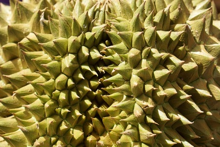 Close up of the spiky durian fruit, shallow depth of field