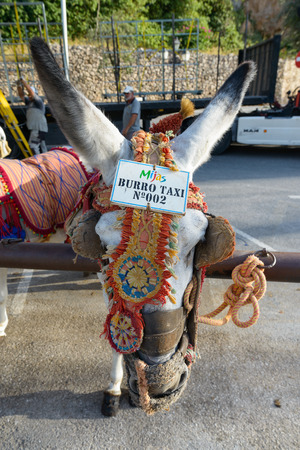 burro: MIJAS, SPAIN - SEPTEMBER 6, 2016 -Close up of donkey taxi waiting in mountais of Mijas village in Malaga Costa Del Sol