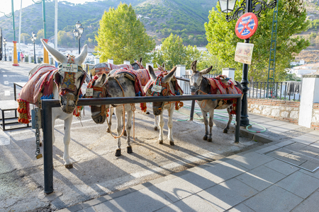 burro: MIJAS, SPAIN - SEPTEMBER 6, 2016 -Donkey taxis waiting in mountais of Mijas village in Malaga Costa Del Sol