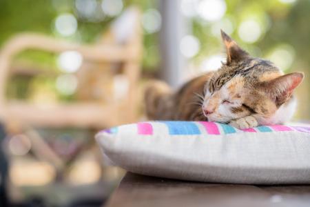 Cute Calico Cat Sleeping On The Cushion