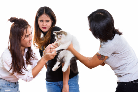 Three young Asian woman friends playing with cute cat with one f