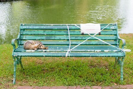 Stray cat sleeping on the bench with social distancing sign at the park