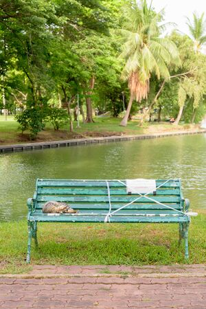 Stray cat sleeping on the bench with social distancing sign at the park Standard-Bild - 147820953