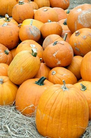 호박의 큰 그룹은 세로 형식으로 가을, 추수 감사절이나 할로윈에 대한 판매에 대한 준비가 쌓여. 스톡 콘텐츠